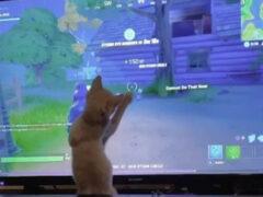 Котёнку интересно всё, что происходит на экране телевизора