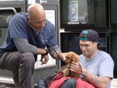 Ветеринар ходит по улицам и лечит питомцев, принадлежащих бездомным людям