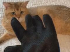 Кот получил модную шляпу, сделанную из его собственной шерсти
