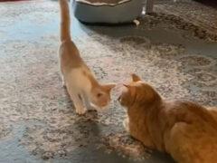 Кот забавно реагирует на нарушение его личного пространства