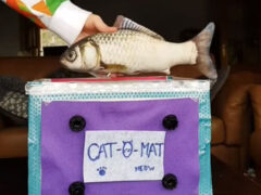Шутливый видеоролик показал зрителям, как можно сделать кошку