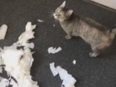 Кошка не испытала никакого почтения к хозяйским запасам «на чёрный день»