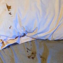 В постельном белье, испачканном чем-то коричневым, не оказалось ничего страшного