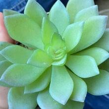 Любительница растений долгое время заботилась об искусственном цветке