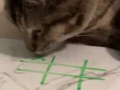 Маясь от скуки, хозяин решил сыграть с кошкой в крестики-нолики