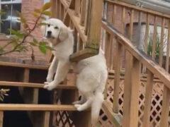 Не рассчитав собственные габариты, собака застряла в ограждении