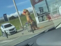 Чудак отправился за покупками, нарядившись динозавром