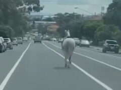Сбежавшая лошадь чуть не попала под автобус