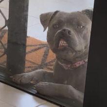 Собака, прижавшаяся мордой к стеклу, стала выглядеть уморительно