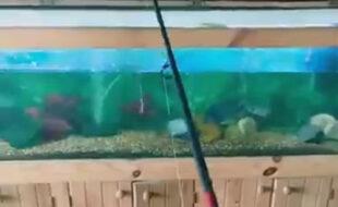 С помощью аквариума чудак сумел порыбачить, не покидая дом