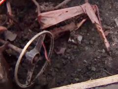 Домовладелец обнаружил машину, похороненную в его саду