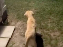 Выйдя на прогулку, собака облаяла призрака
