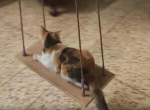 Кошка отлично проводит время, расслабляясь на качелях