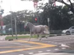 Прогулка лошади по опустевшим улицам оказалась не особенно долгой
