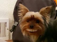 Улыбка собаки, укравшей вставные зубы, довела хозяина до истерики