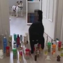 Кошка доказала, что она ловчее и грациознее собаки