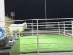 Овце не понравилось, что её продают с аукциона