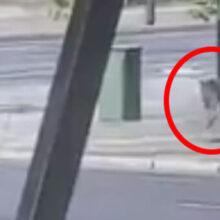 Воспользовавшись тем, что улицы пустынны, кенгуру совершил прогулку