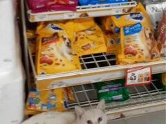 Умный бездомный кот прекрасно знал, что ему нужно в магазине