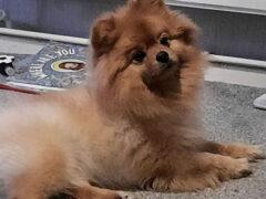 Хозяйка выяснила, что стричь собак куда сложнее, чем кажется