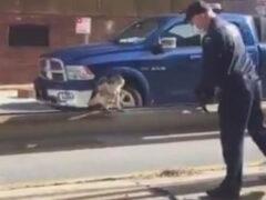 Полицейские не бросили в беде ястреба со сломанным крылом