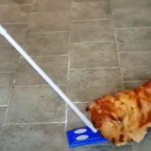 Новая швабра была принята за гигантскую собачью игрушку