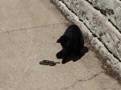 Владелица поразилась, увидев, какую подружку нашёл себе домашний кот