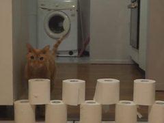 Кот решил, что слишком высокую стену можно просто сокрушить