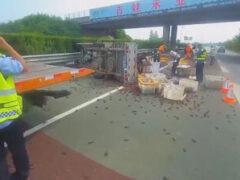 В результате аварии дорога оказалась завалена раками